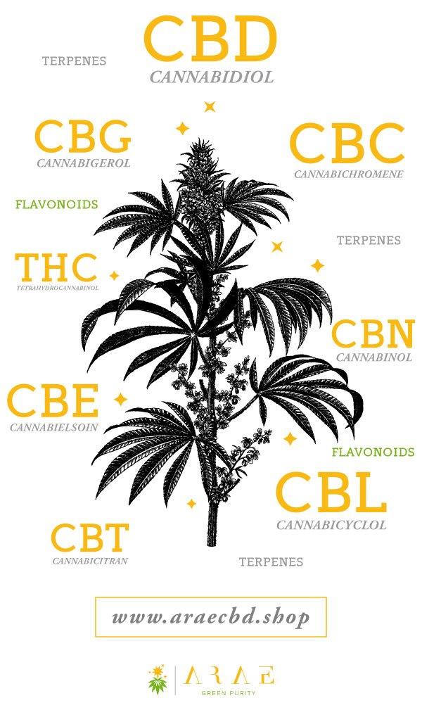 Imagen que representa los distintos compuestos medicinales que contiene la planta de cáñamo*