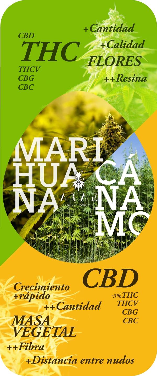 Imagen que muestra las diferencias entre el quimiotipo del cáñamo y la marihuana*