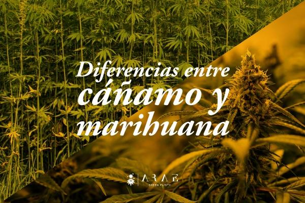 Imagen mostrando un campo de cañamo y una planta de marihuana