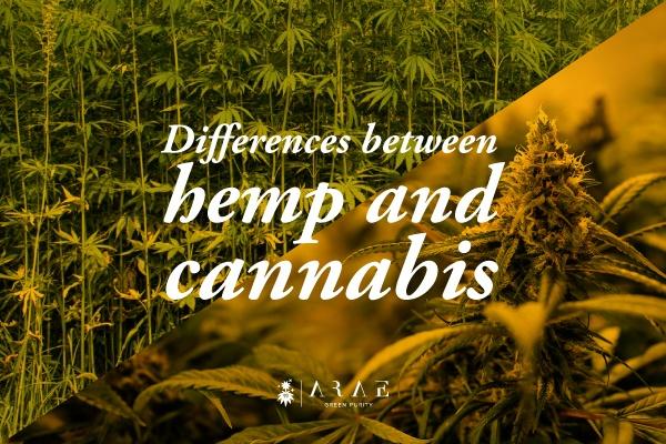 Image showing a hemp field and a marijuana plant
