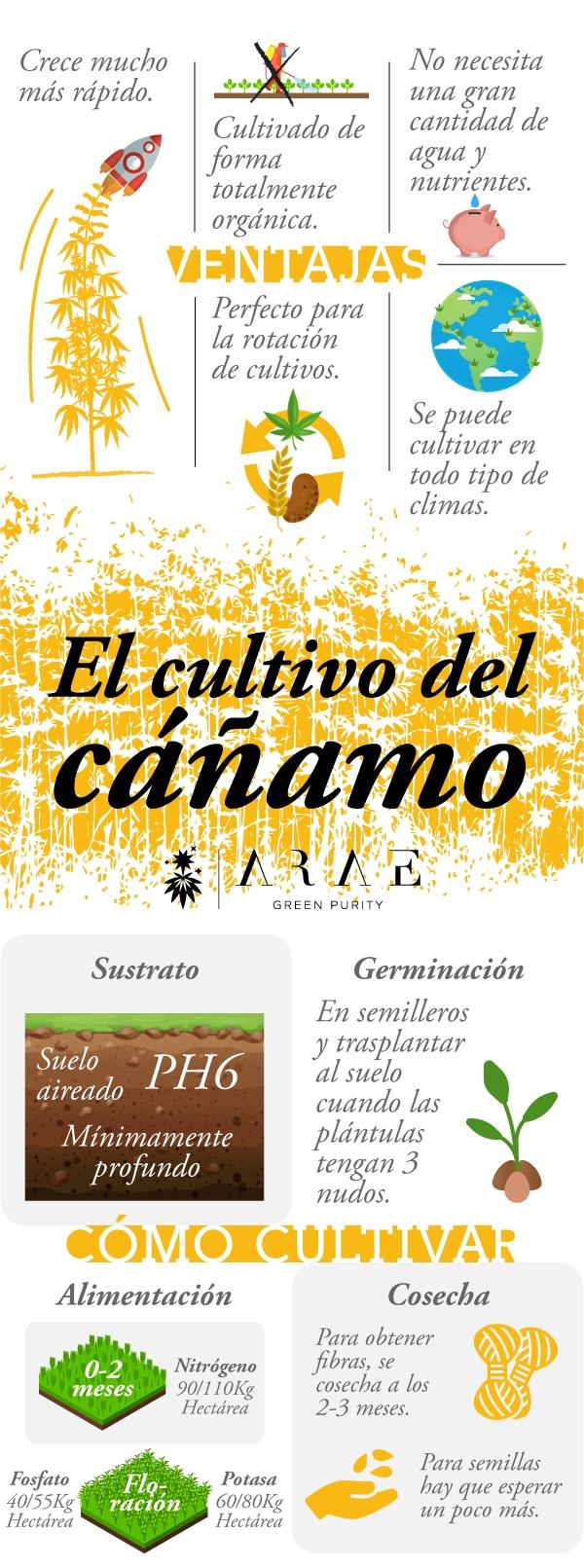 Imagen que muestra los requisitos para cultivar cáñamo e infografía representando las ventajas del cultivo de cáñamo*
