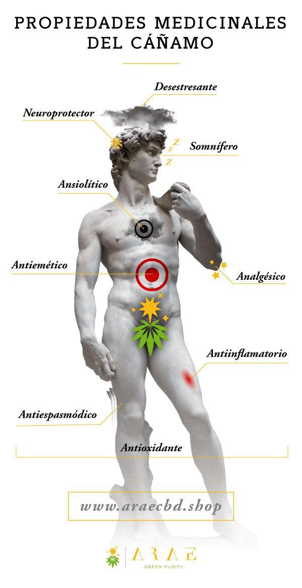 Infografía que muestra las propiedades medicinales del cáñamo*