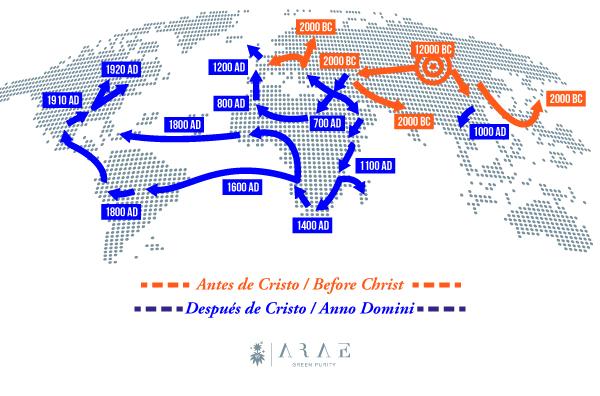 Imagen de un mapa que muestra mediante flechas la expansión por el mundo de la planta de cannabis*