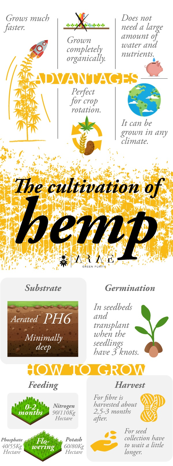 Image showing the requirements for growing hemp, Infographic representing the advantages of hemp growing*