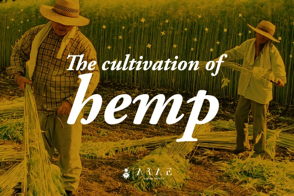 Image of two farmers collecting hemp